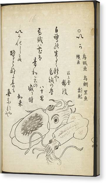 Squids Canvas Print - Squid by British Library