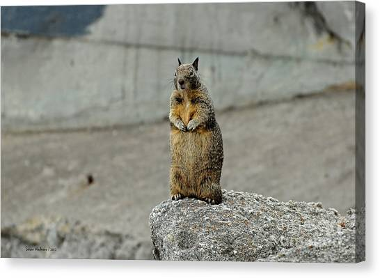 Squirrel At Lover's Point  Canvas Print
