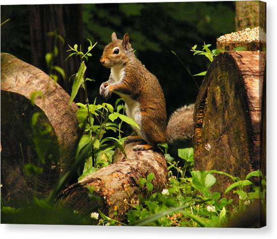 Squirrel Canvas Print by Brittany Gandee