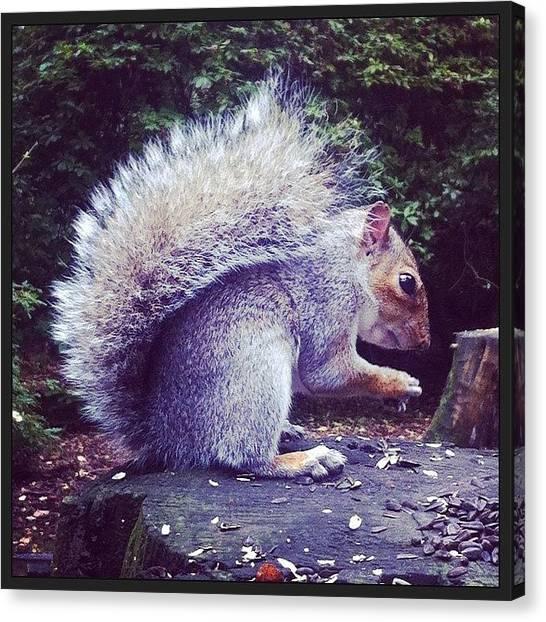 Squirrels Canvas Print - #squirrel #bushytail #grey #autumn by Beci Major