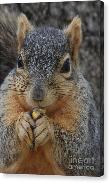 Canvas Print - Squirrel Holding A Piece Of Corn by Lori Tordsen