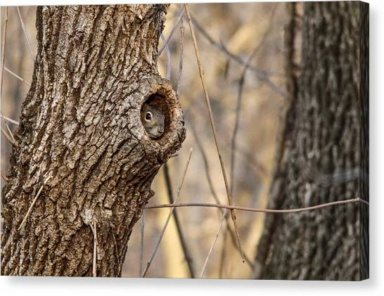 Squirrel Hole Canvas Print by Jill Bell