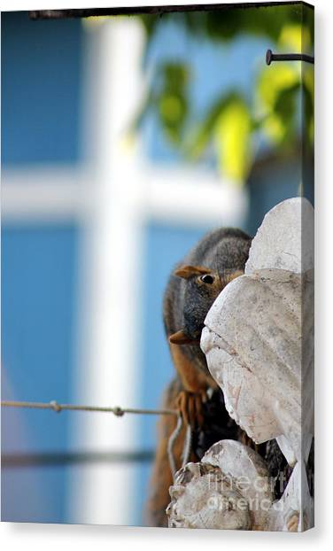 Squirrel In Hiding Canvas Print