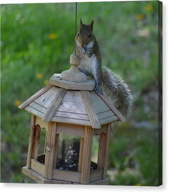 Squirrels Canvas Print - Squirrel On Bird Feeder by Jessica Thomas