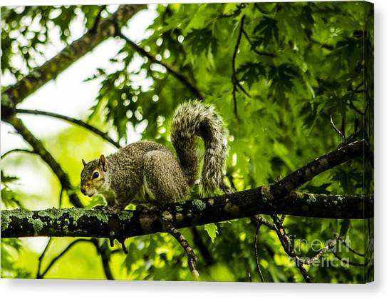 Squirrel On The Hunt Canvas Print by Deborah Smolinske