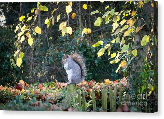 Squirrel Perched Canvas Print