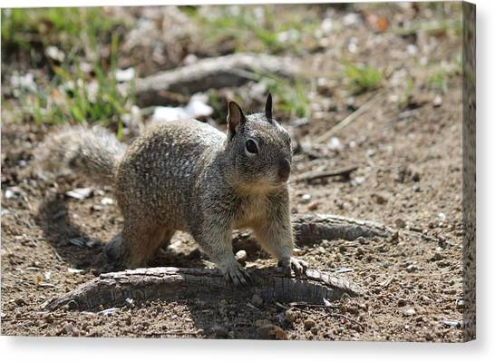 Squirrel Play  Canvas Print