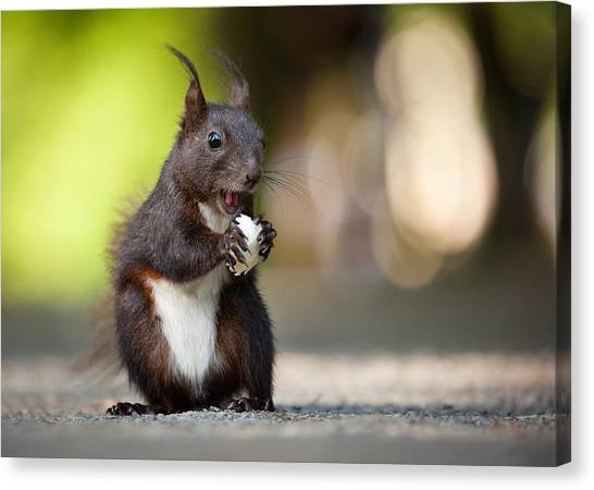 Squirrels Canvas Print - Squirrel by Robert Adamec
