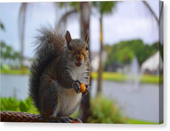 Teeth Canvas Print - Squirrel Smile by Doug Grey