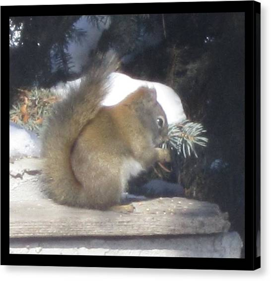 Squirrel Three Canvas Print