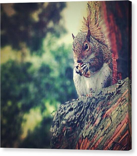 Small Mammals Canvas Print - #squirrel #tree by Jenna Goodwin