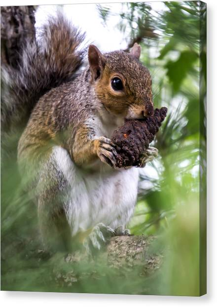 Squirrel With Pine Cone Canvas Print