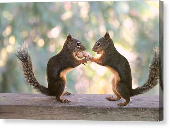 Squirrels That Share Canvas Print
