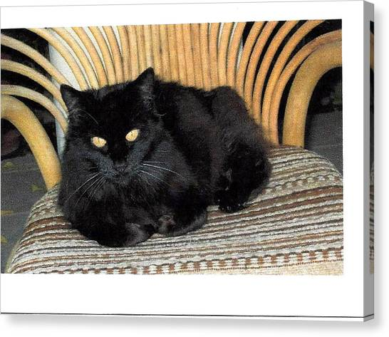 Manx Cats Canvas Print - Squirtie by Jay Milo