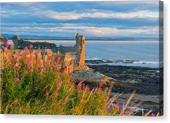 St Andrews Castle Canvas Print by David Ross