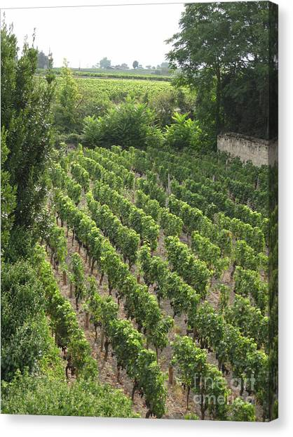 St. Emilion Vineyard Canvas Print