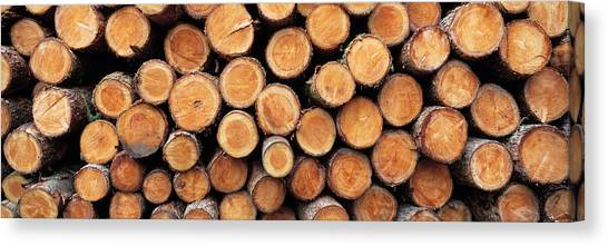 Deforestation Canvas Print - Stack Of Logs In Forest, Burrator by Panoramic Images