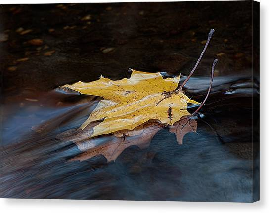 Stacked Autumn Leaves On Water Canvas Print