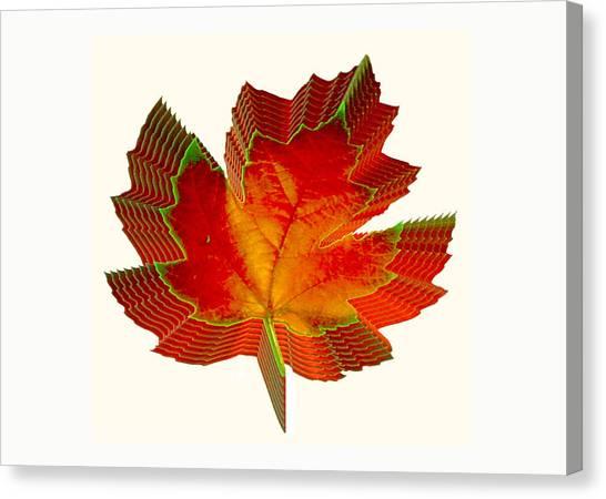 Stacked Maple Leaf  Canvas Print by Susan Elizabeth Dalton