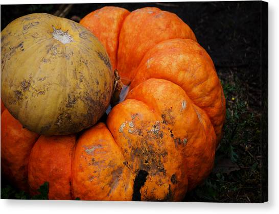 Stacked Pumpkins Canvas Print