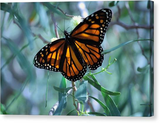 Stained Glass Wings Canvas Print