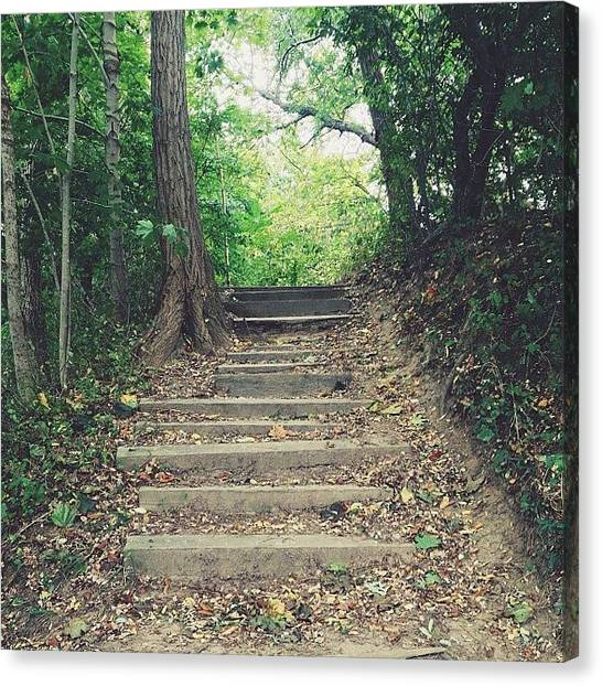 Forest Paths Canvas Print - Stairs by Ashley Morton