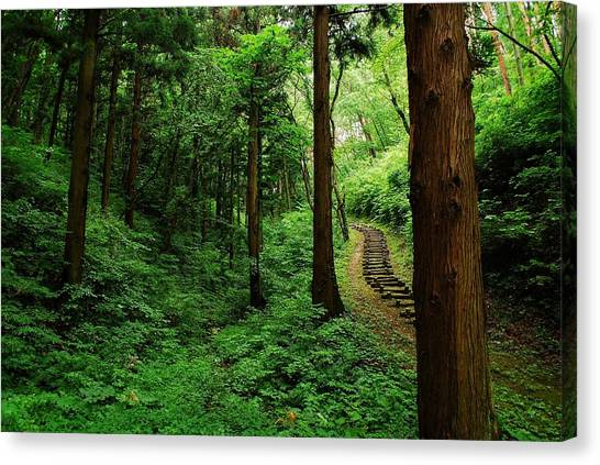 Outdoors Canvas Print - Stairway To Healing by Aaron Bedell