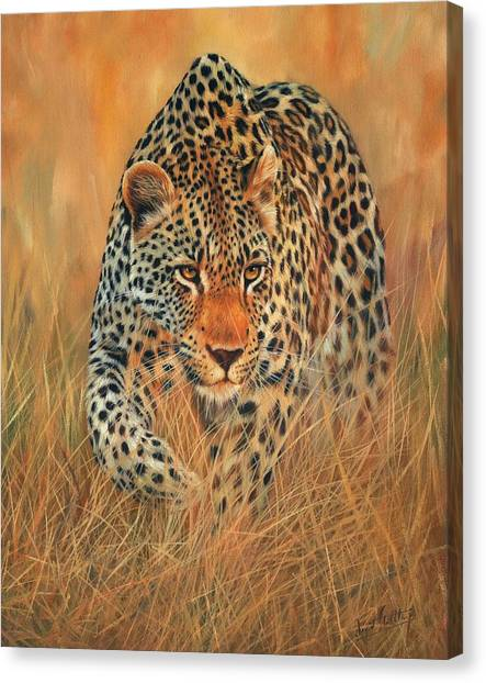Stalking Leopard Canvas Print