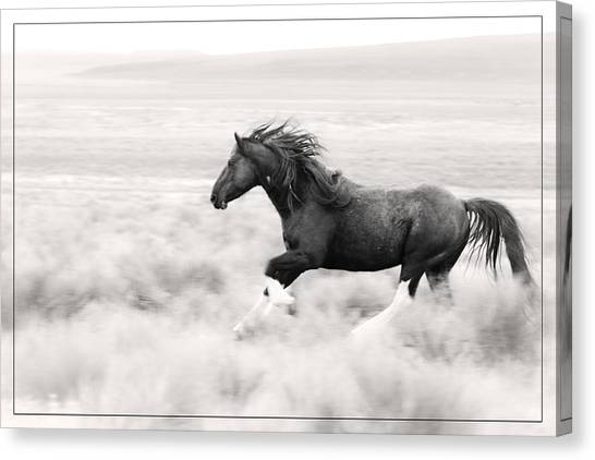Stallion Blur Canvas Print