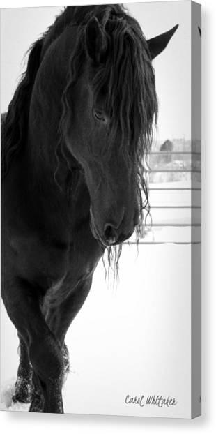 Stallion Essence Canvas Print
