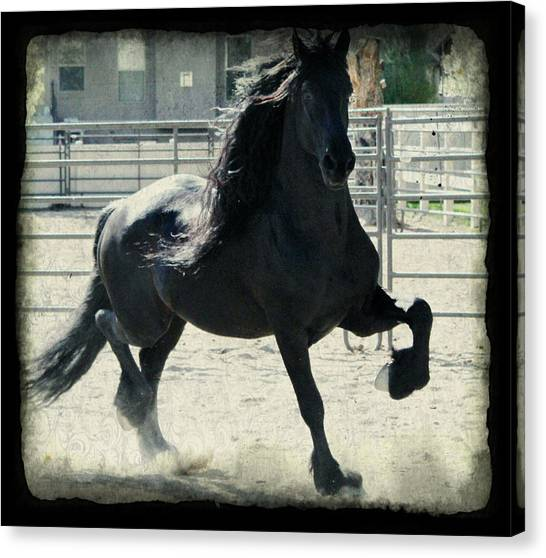 Stallion In Motion Canvas Print