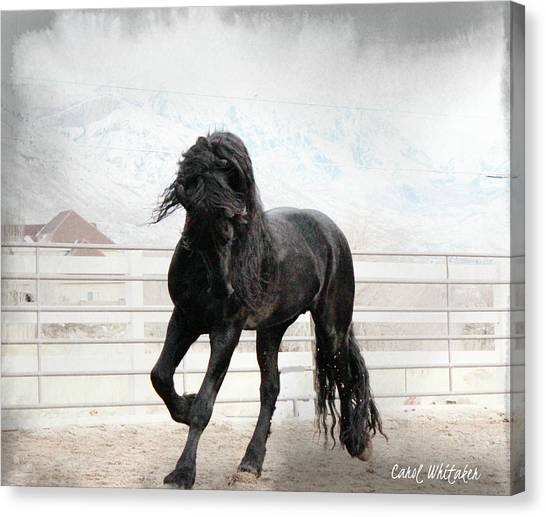 Stallion Magic Canvas Print