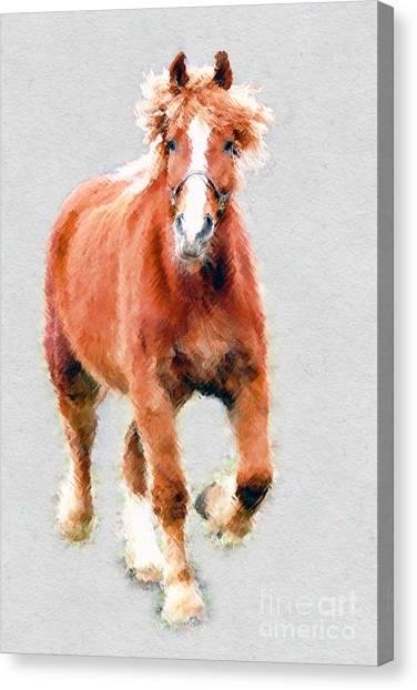 Stallion Portrait Canvas Print by Dan Friend
