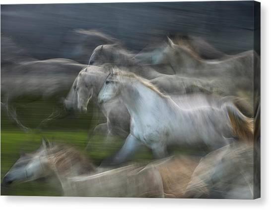 Horse Galloping Canvas Print - Stampedo by Milan Malovrh