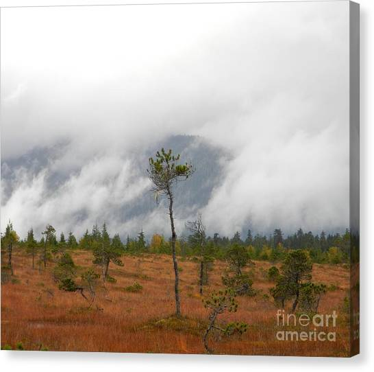 Canvas Print featuring the photograph Stand Alone by Laura  Wong-Rose