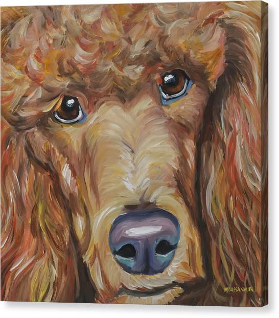 Poodles Canvas Print - Standard Poodle by Melissa Smith
