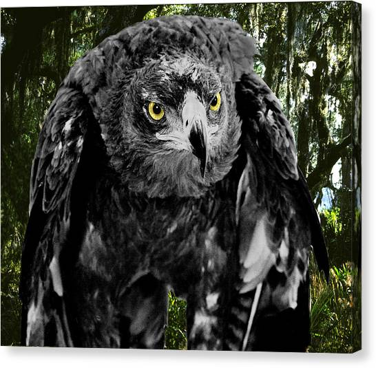 Standing Eagle Canvas Print by Fred Leavitt