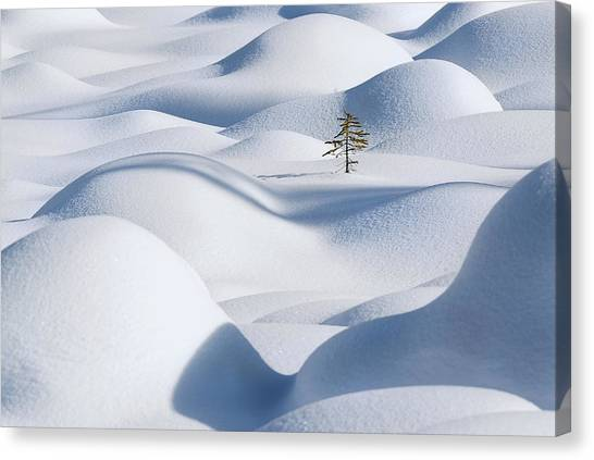 Fir Trees Canvas Print - Standing In The Waves by Victor Liu