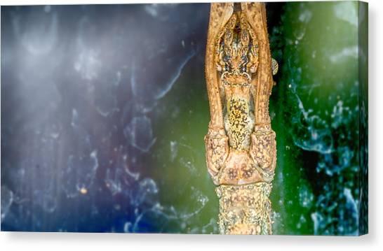 Standing Still Like A Branch Canvas Print