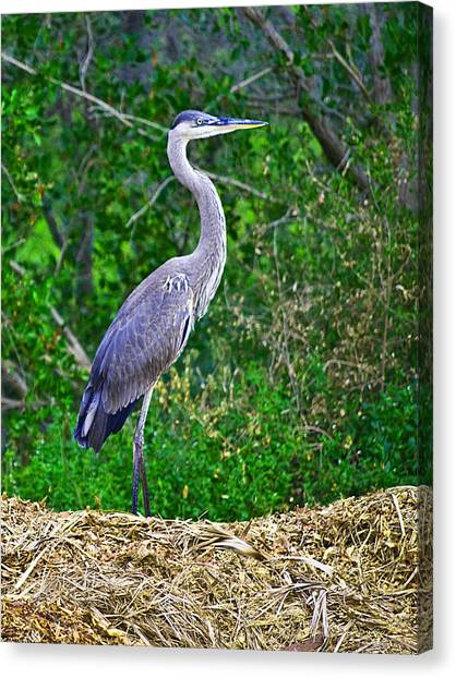 Standing Tall And Proud Wil 338 Canvas Print