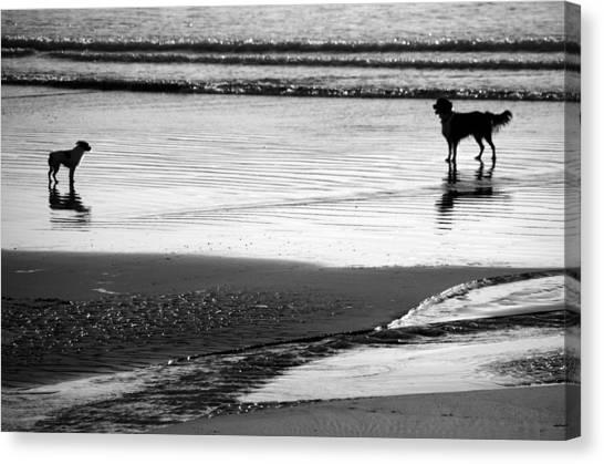 Standoff At The Beach Canvas Print