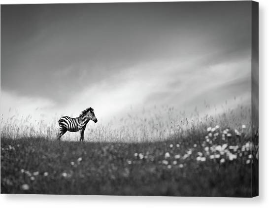 Breeze Canvas Print - Stands On The Hill. by Eiji Itoyama