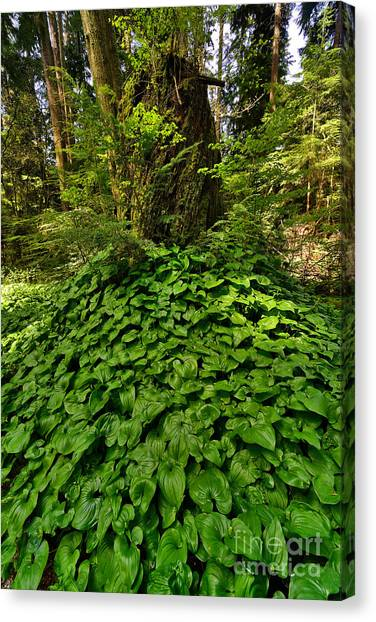 Stanley Park In Spring Time Canvas Print by Terry Elniski