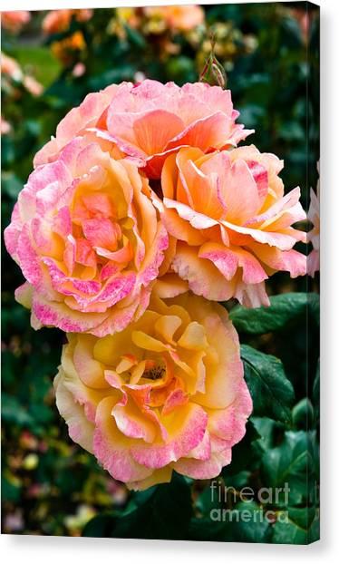 Stanley Park Rose Garden 3 Canvas Print by Terry Elniski