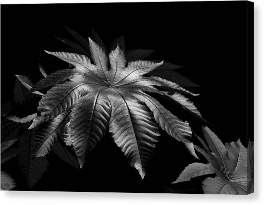 Star Leaf Canvas Print