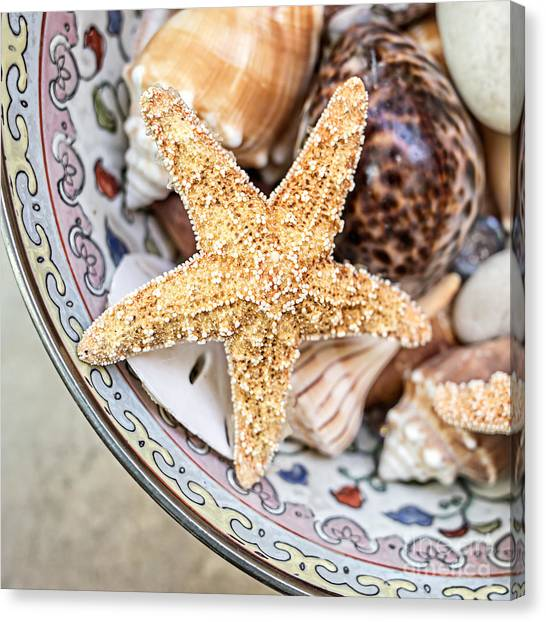 Starfish Canvas Print - Starfish And Seashells by Edward Fielding