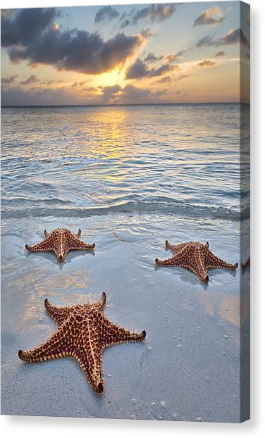 Rum Canvas Print - Starfish Beach Sunset by Adam Romanowicz