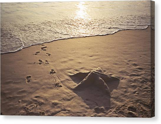Canvas Print - Starfish In The Sand by Christine Rivers