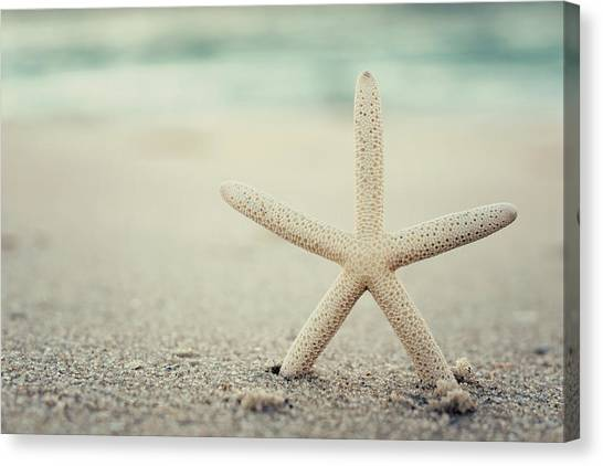 Starfish On Beach Vintage Seaside New Jersey  Canvas Print