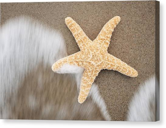 Robert Frank Canvas Print - Starfish by Robert Frank